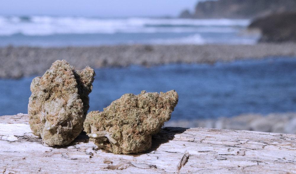 Oregon Cannabis Authority - Eugene, OR