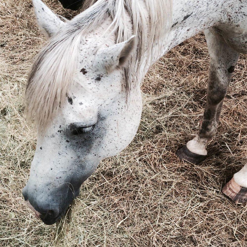 horsieblog4.jpg