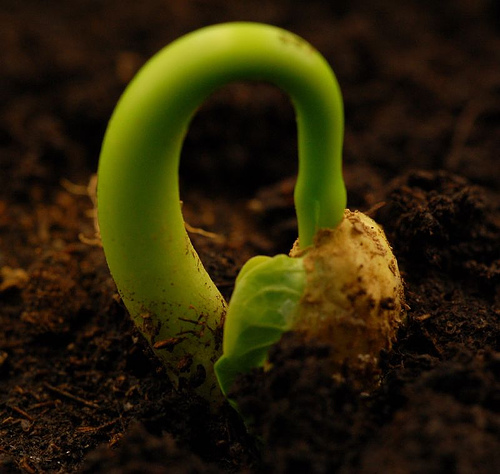 growing-seed1