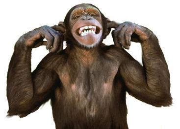 chimphearnoevil