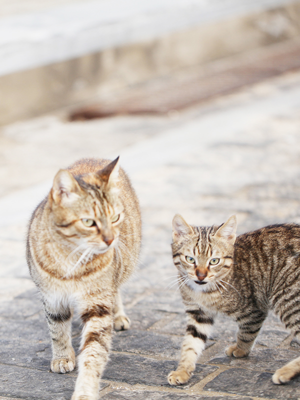 cats.paros.greece.jpg