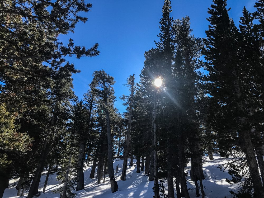 snowshoe3.jpg