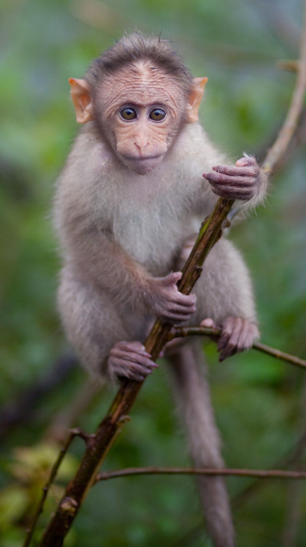 baby_monkey_animal_1109.jpg