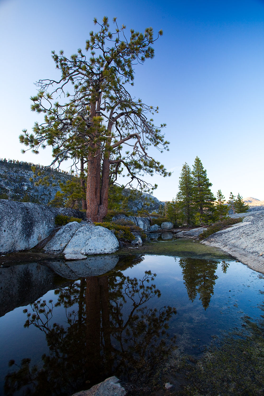 yosemite__reflection_tree_pond_0358.jpg