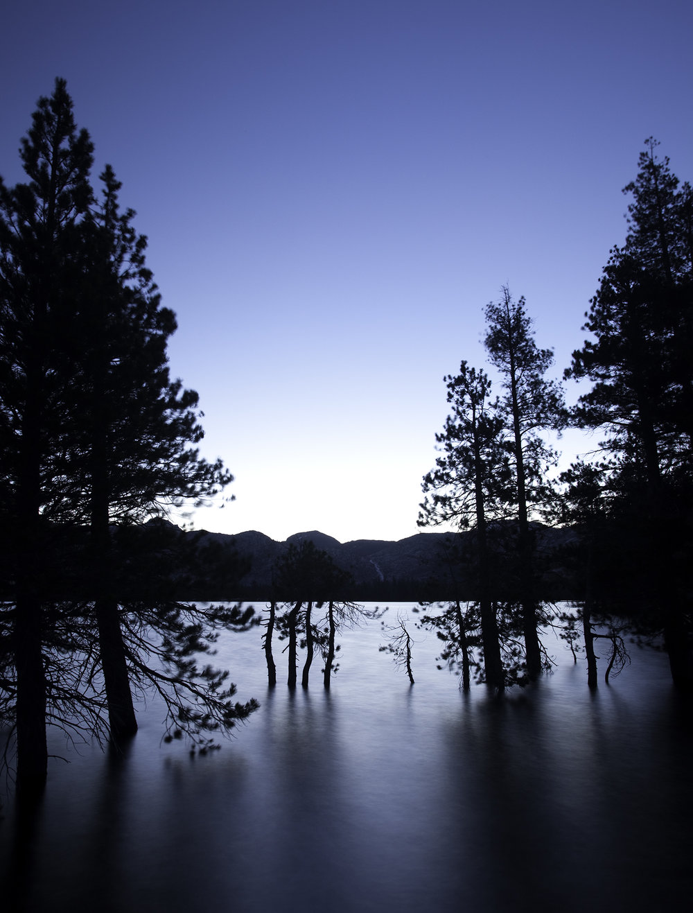yosemite_lake_tree_0531.jpg