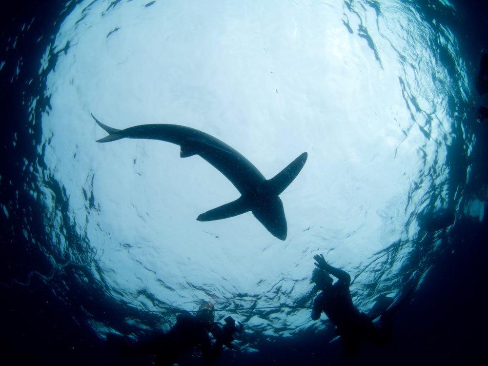 shark silhouette.jpg