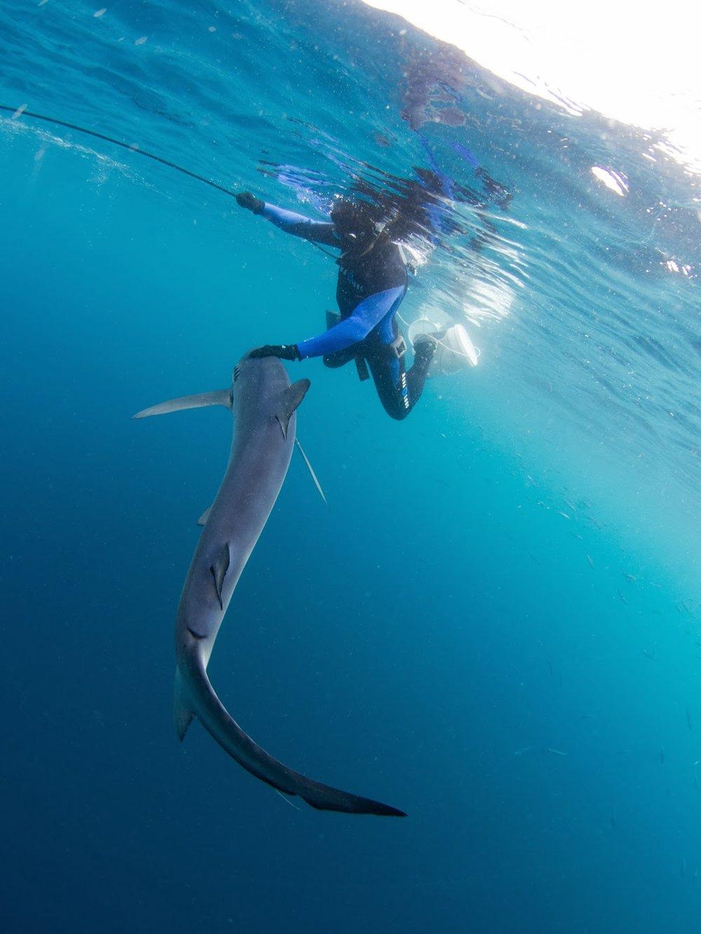 touching shark.jpg
