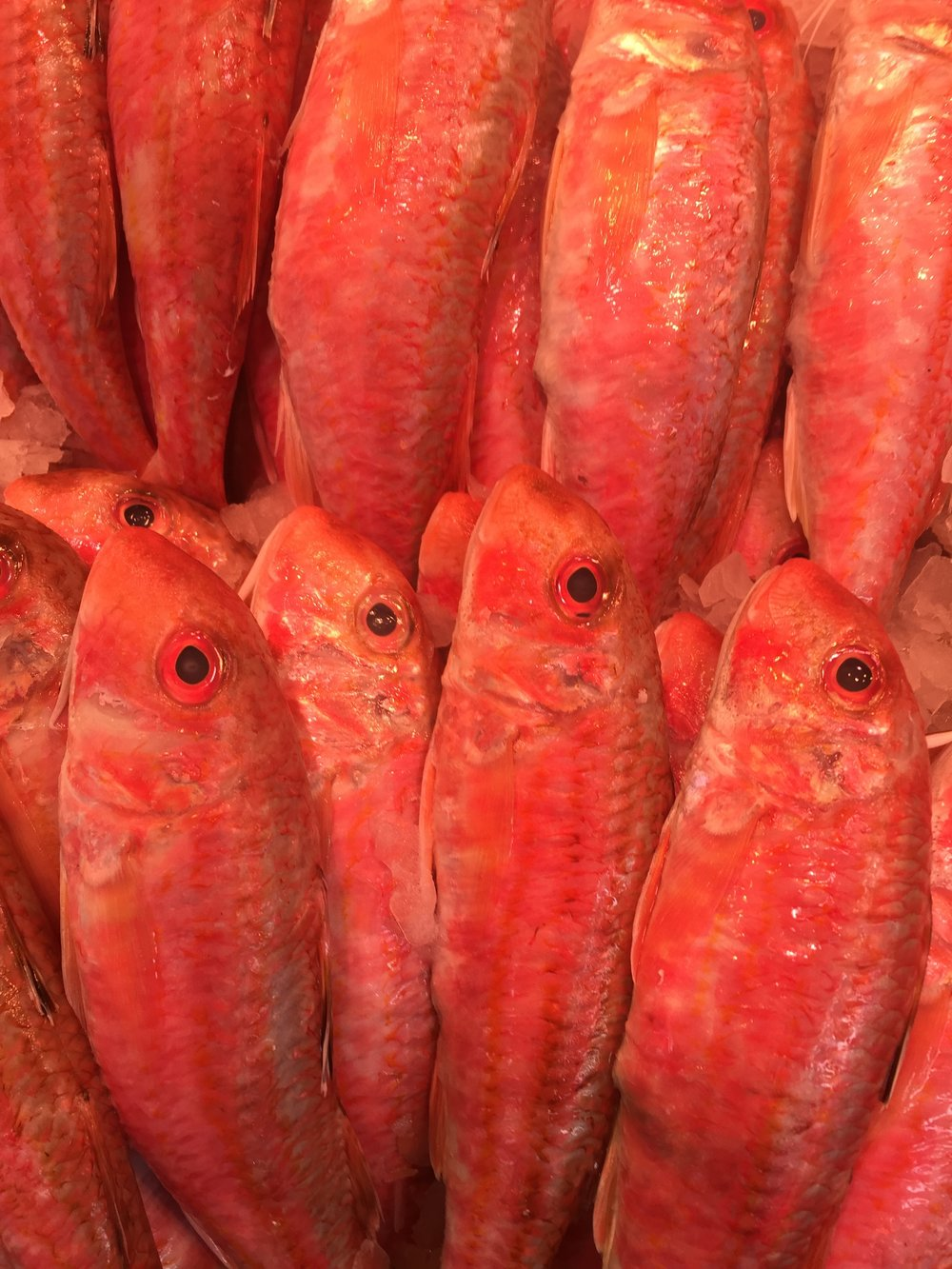 Red mullet, also known as Goatfish, at the Albert Cuypmarkt, Amsterdam.