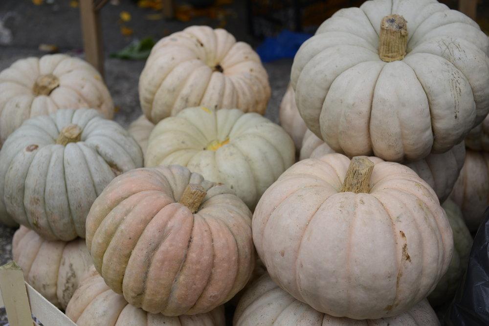 pumpkins at istanbul's bakirkoy market