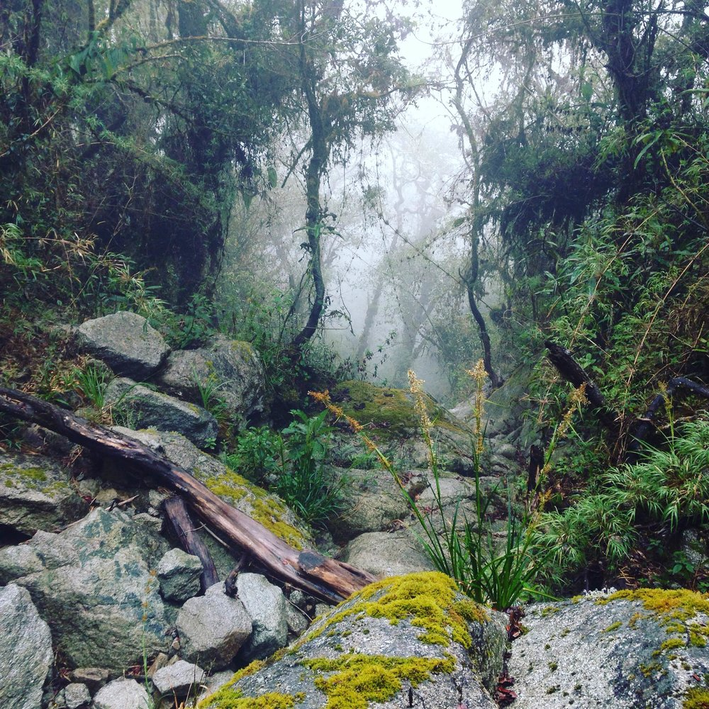Inca Trail Day 3, Cloud Forest - Instagram image from Chloe's trip