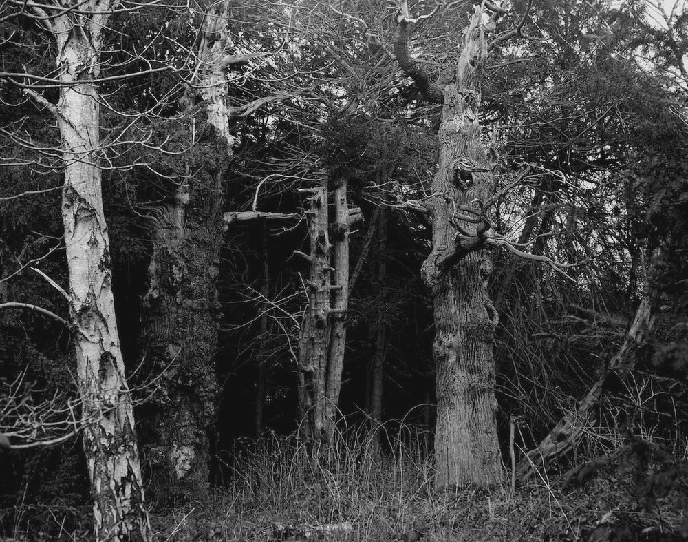 Image from the series  The Forest  by Rachel Maloney