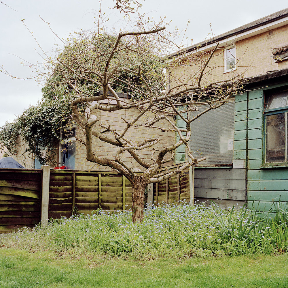 From the series   Familiar Gardens