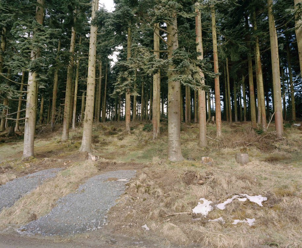 Alwen Forest - An area of forest under Welsh Government Woodland Estate management to protect and diversify the woodland in a sustainable way.