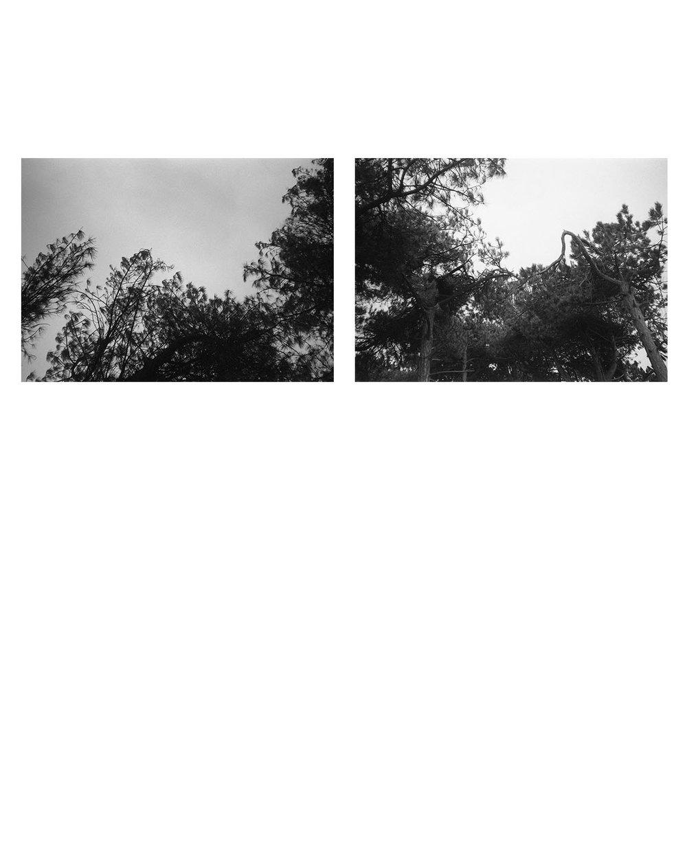 photograd 2.jpg