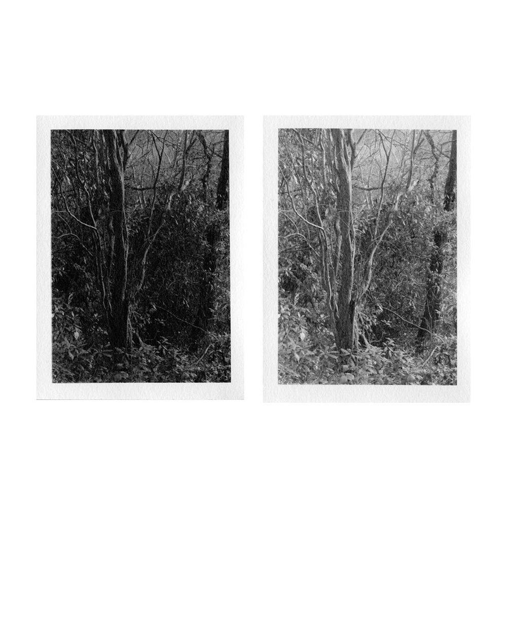 photograd 6.jpg