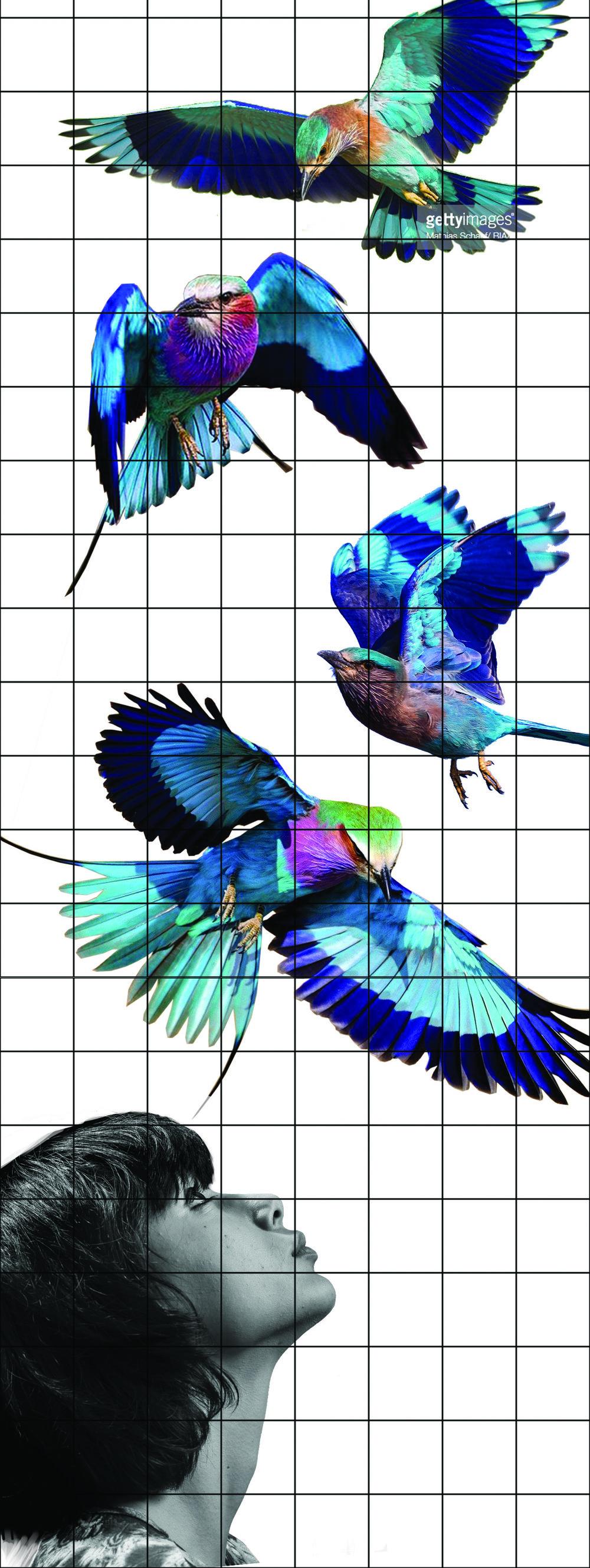 skolegade5 birds33333 grid.jpg