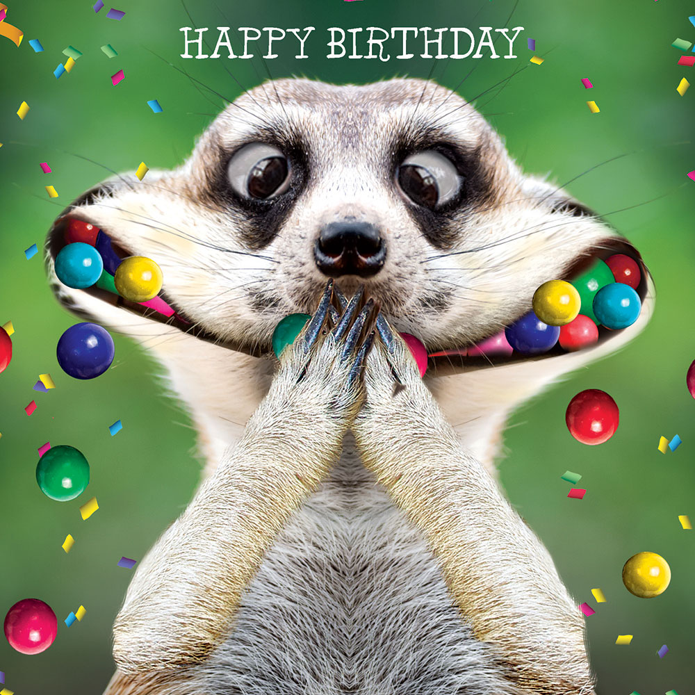 Gif Animals Birthday Cake