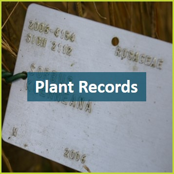 Plant Records Volunteer.jpg