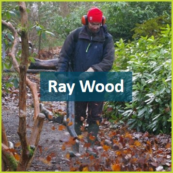 Ray Wood volunteer.jpg