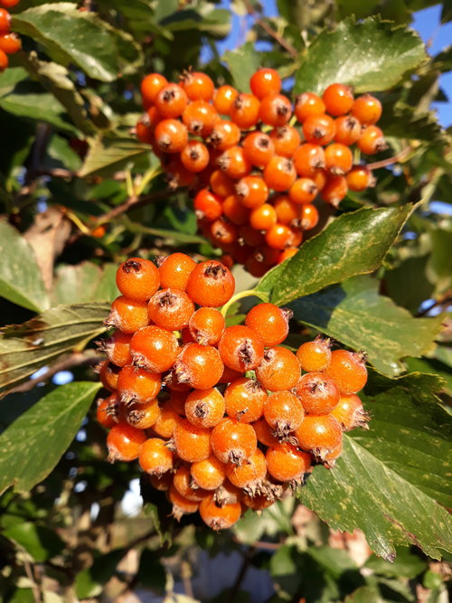 Meetings With Trees: Tree Fruits & Seed Dispersal