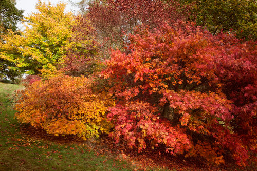 Meetings With Trees: Autumn Colour & Leaf Fall