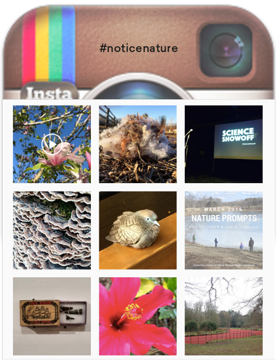 Inspiration: Focus of #noticenature posts is on small details and moments of contemplation.