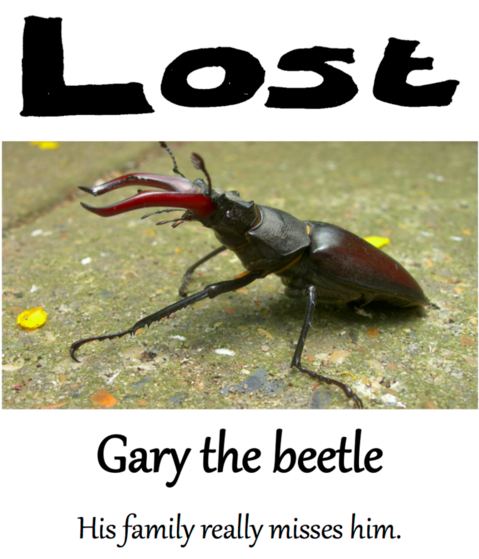 Idea: Lost posters asking the public to join a search to find Gary the Beetle who has gone missing.