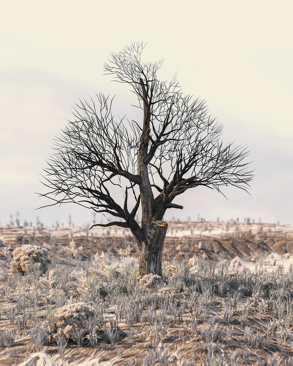 [02-02-18] - Frost.jpg