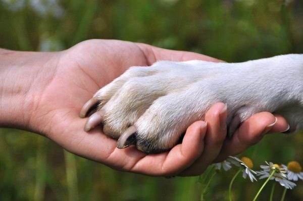 Dog paw.jpg