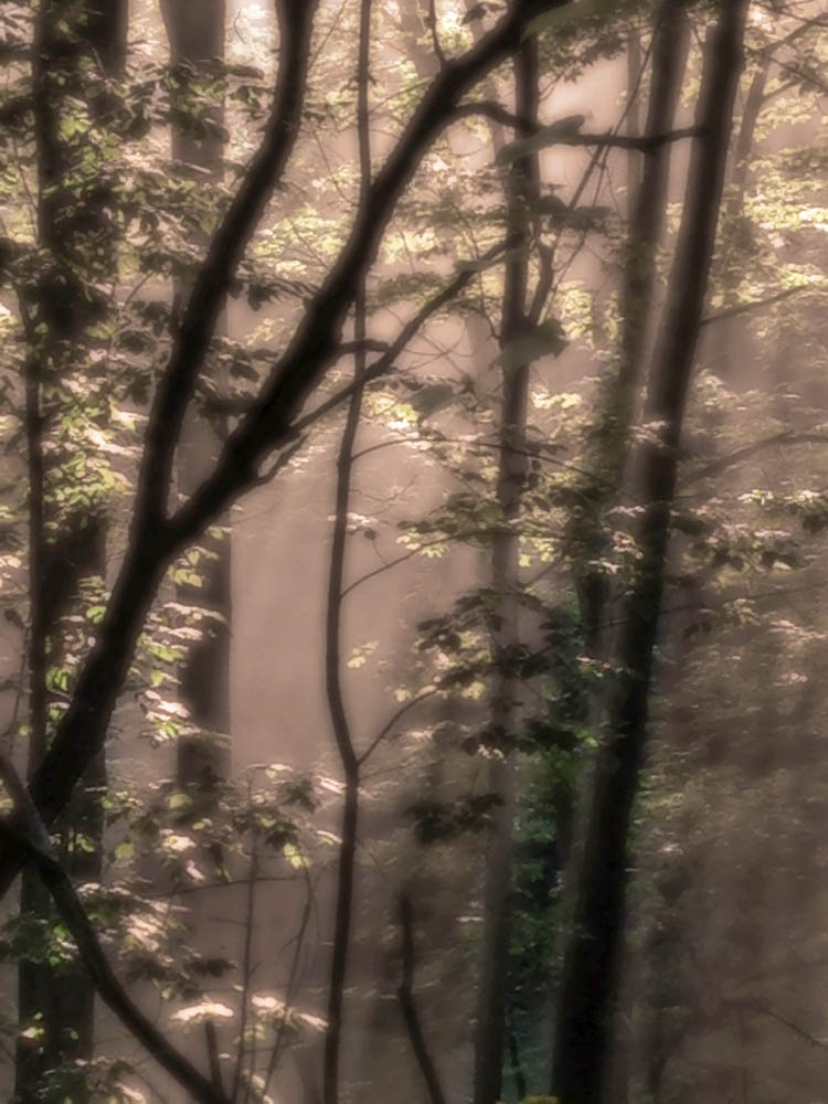 Morning Light 1.jpg