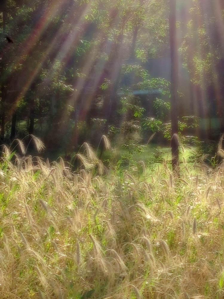 Morning Light 4.jpg