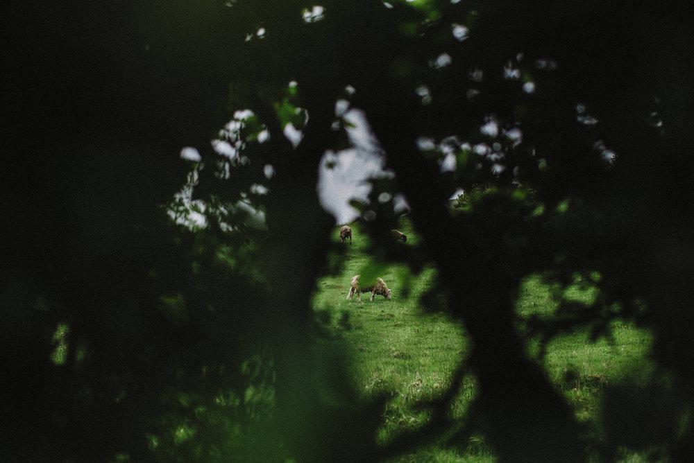 jessandlukeengshoot-1.jpg