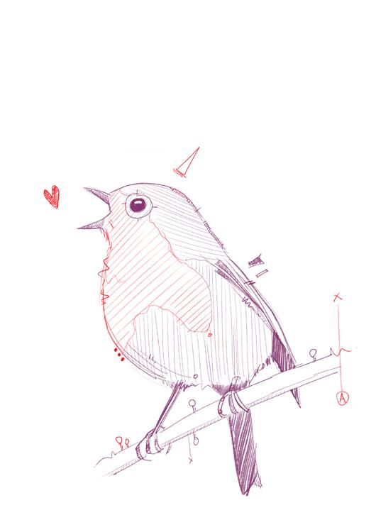 Robin3.jpg
