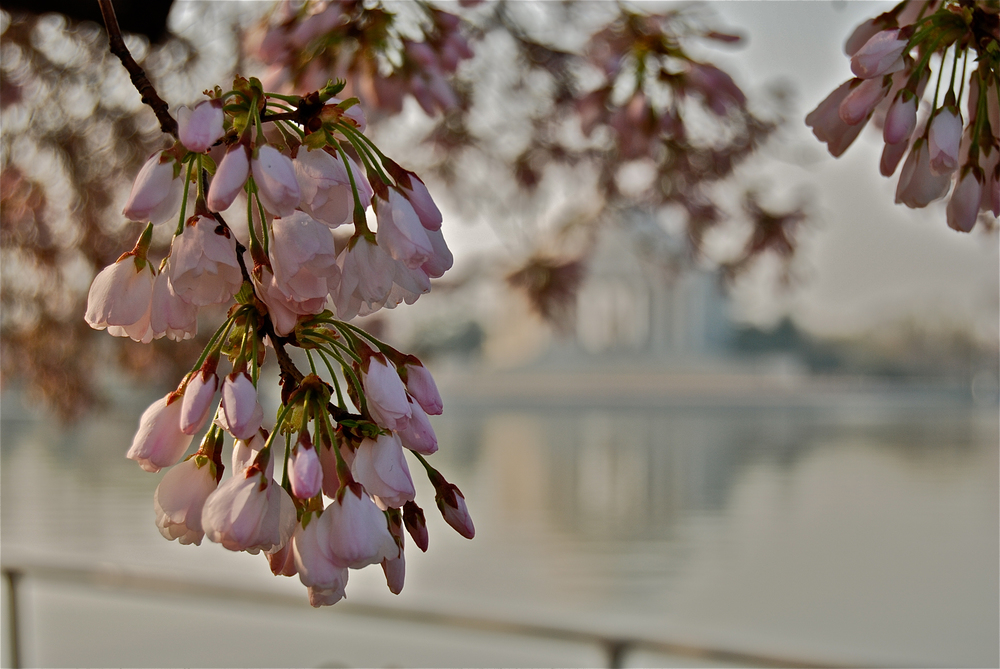 Jefferson Memorial Reflection_2012.jpg