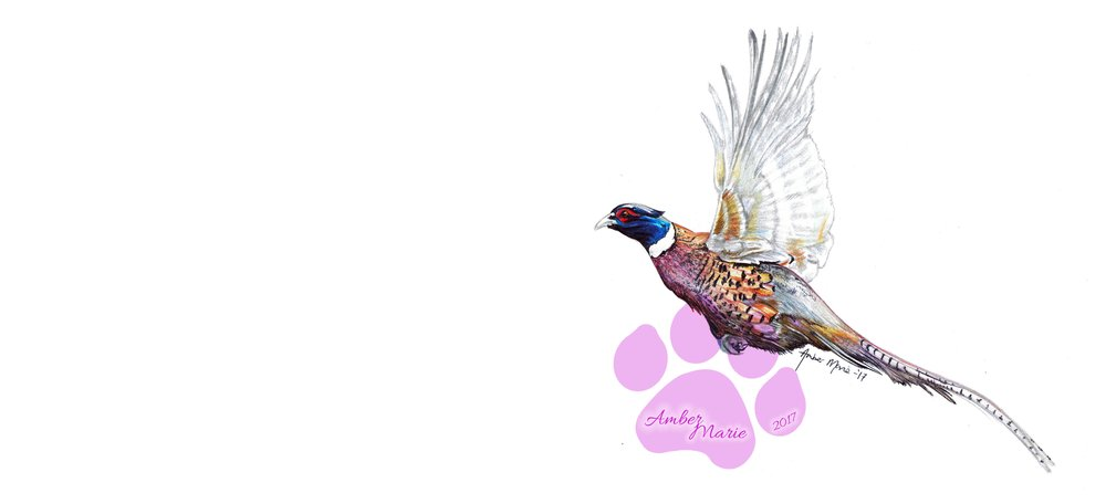 Birds - Pheasants, Partridges and Puffins