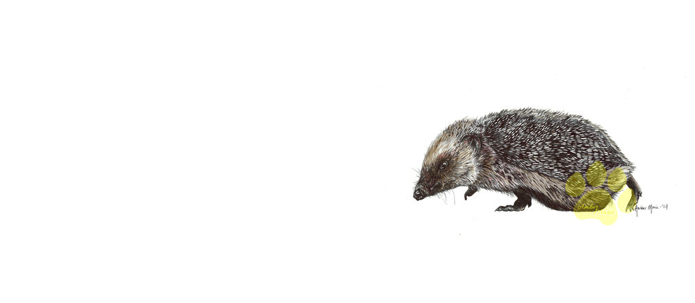 British Woodland - Hedgehogs, Badgers, Hares and Foxes
