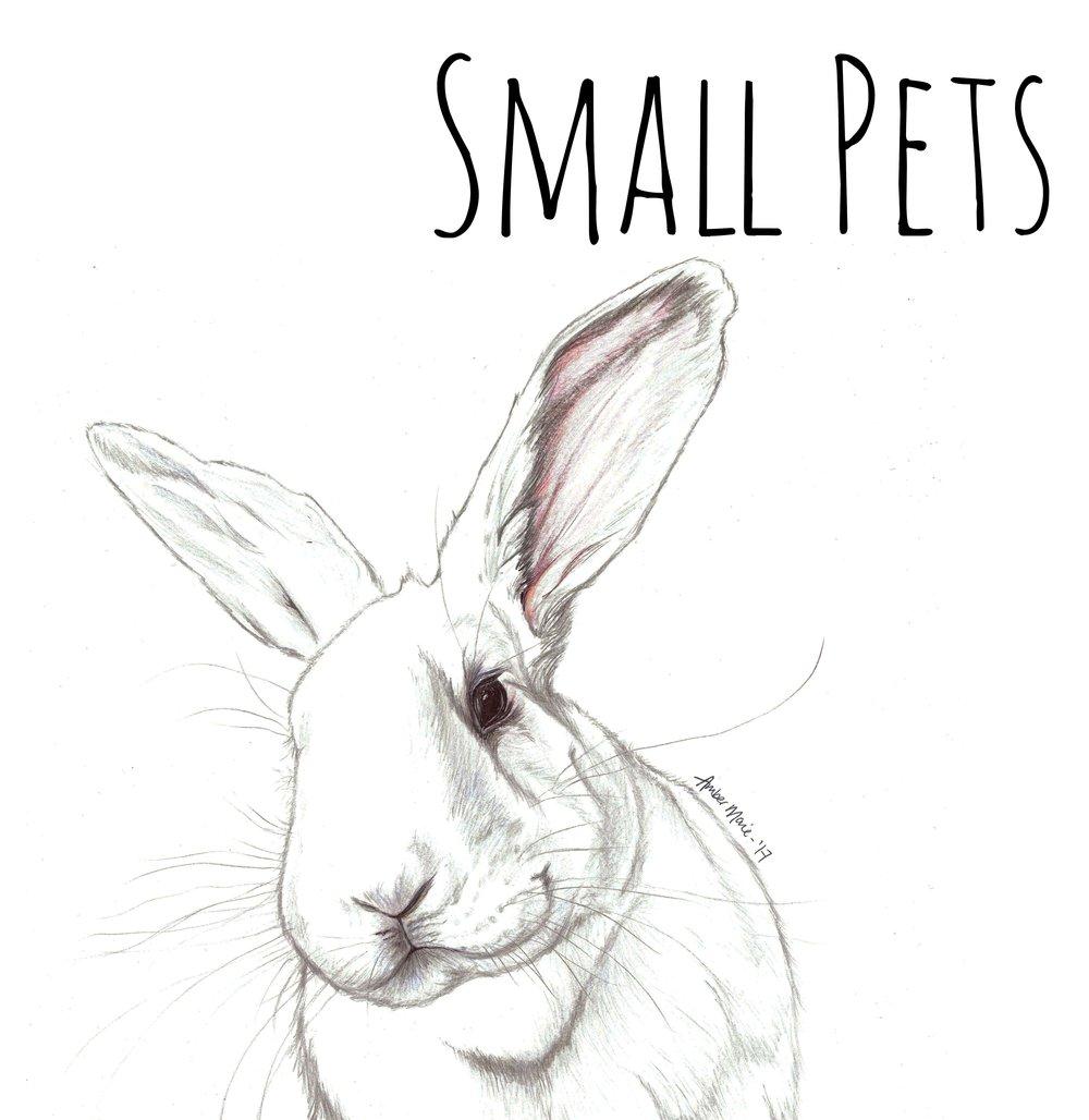 Georgie Evans Rabbit bigger l.jpg