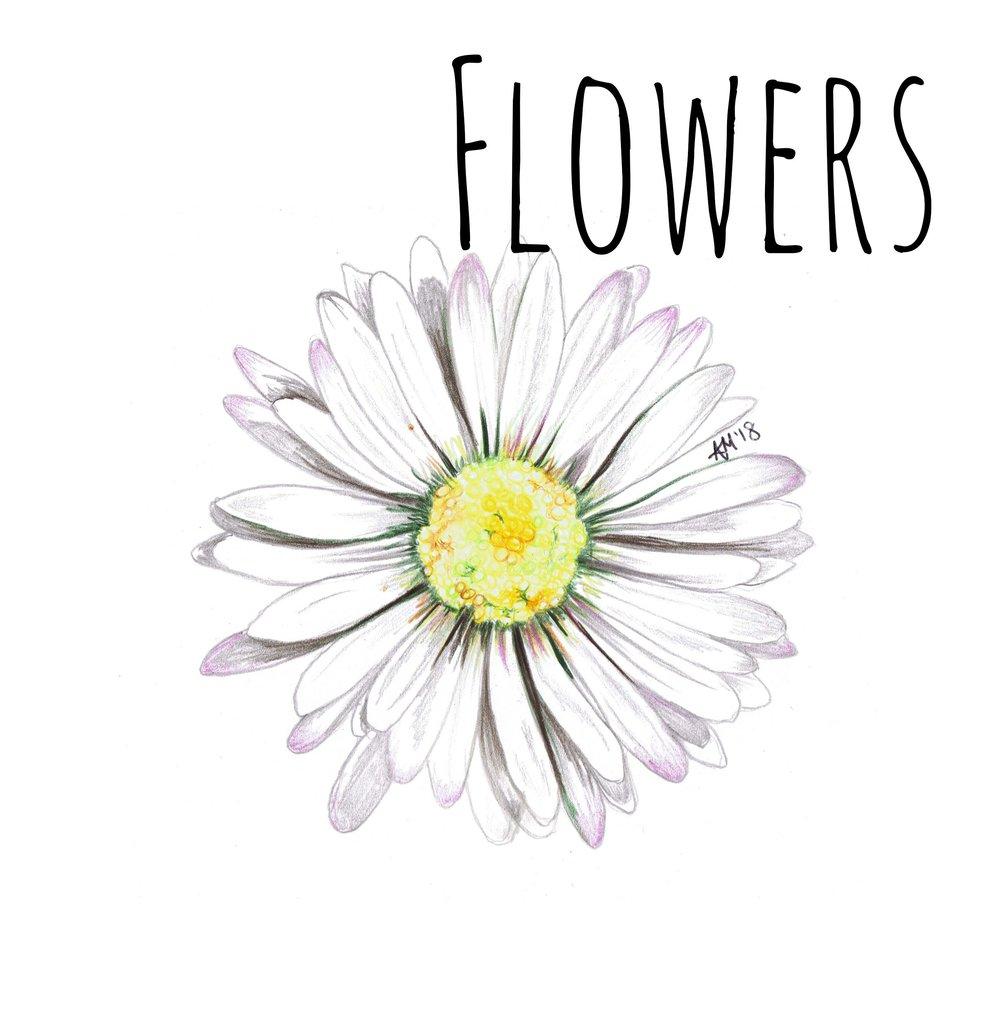 Daisy Diddy flowers.jpg