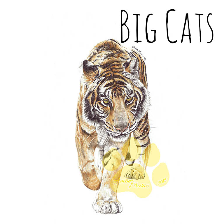 BIG CAT SHOP