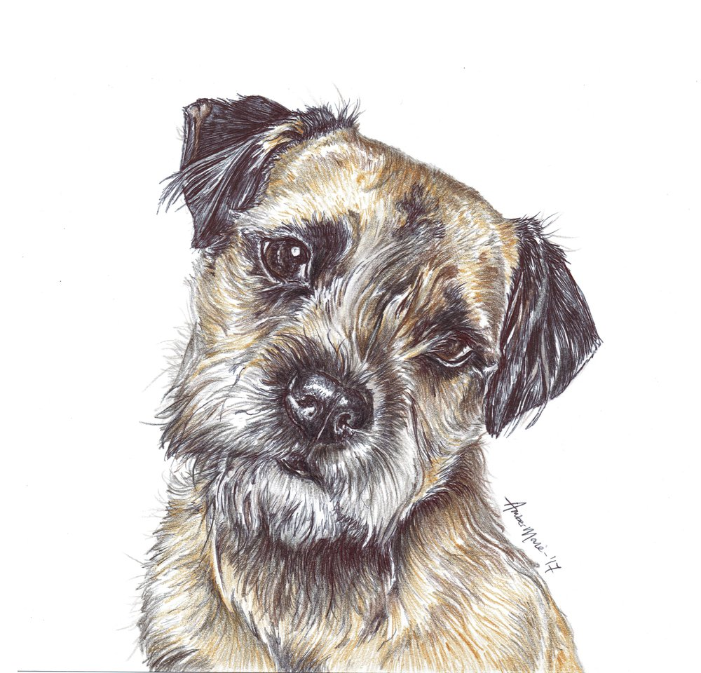Suzanne Duncan Border Terriers.jpg