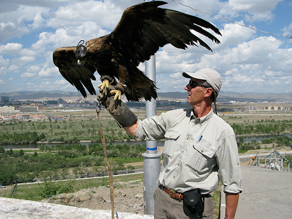 Working with a Kazak eagle in Mongolia