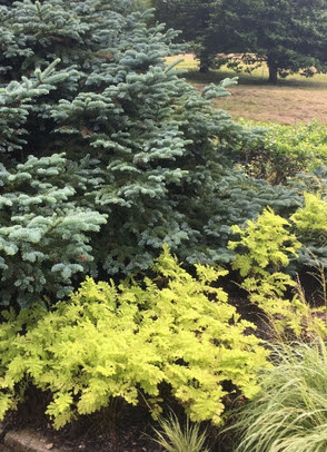 A smattering of Nasella bring the feeling of the beach to the garden
