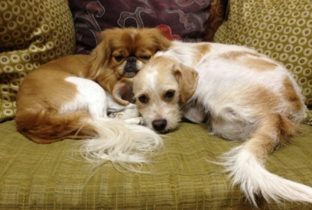 My receptionists and therapy dogs, Ralphie & Joey -