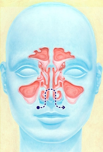 Pathway for nasal irrigation