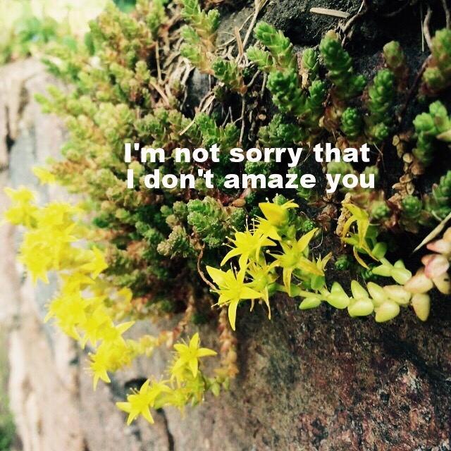 "Marion March 2 2016 Image is a closeup of small green succulents and yellow flowers behind mossy stone. ""I'm not sorry that I don't amaze you"" is overlaid."