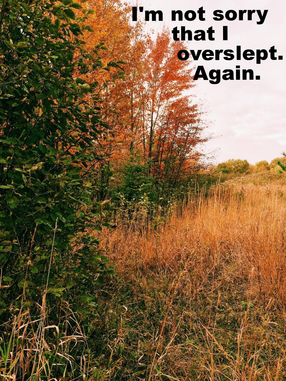 "Anonymous April 26 2016 Image of a field in autumn with golden tall grass and trees with warm-colored leaves beside it and in the distance. ""I'm not sorry that I overslept. Again"" is overlaid."