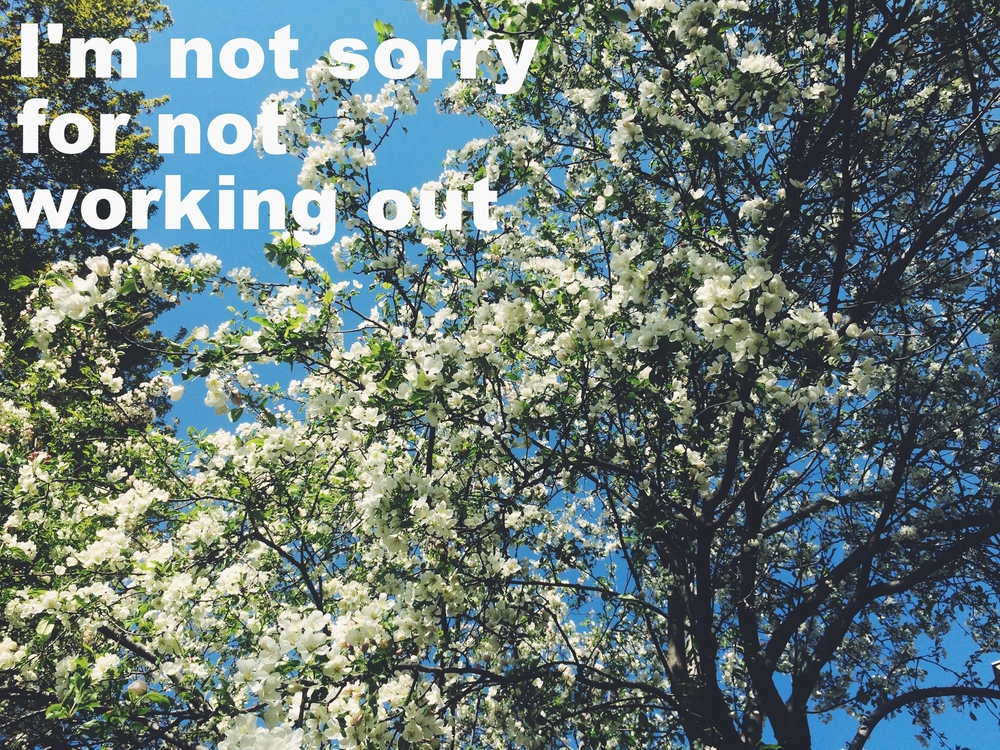 "Anonymous April 26 2016 Image of the top of a tree with white flowers against a blue sky. ""I'm not sorry for not working out"" is overlaid."