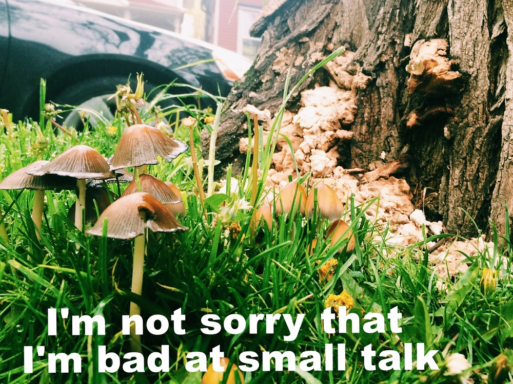 "May 22 2016 Close-up image taken from ground-level of small mushrooms and fungi in the grass against a tree trunk. ""I'm not sorry that I'm bad at small talk"" is overlaid."