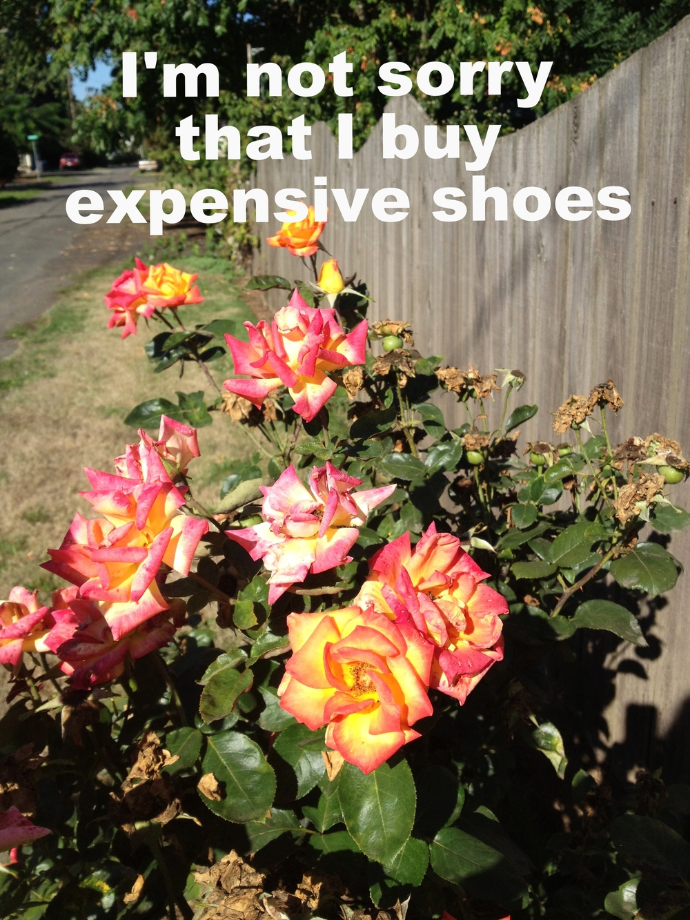 "Anonymous April 29 2016 Image of vibrant roses with pink petals that fade into orange, which fade into yellow. The flowers are against a wooden fence, and ""I'm not sorry that I buy expensive shoes"" is overlaid."