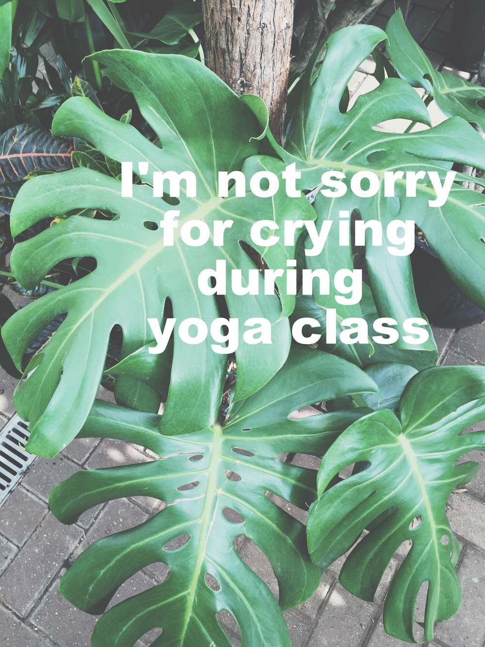 "Anonymous July 6 2016 Image of a plant with large green leaves, shot from above. ""I'm not sorry for crying during yoga class"" is overlaid."